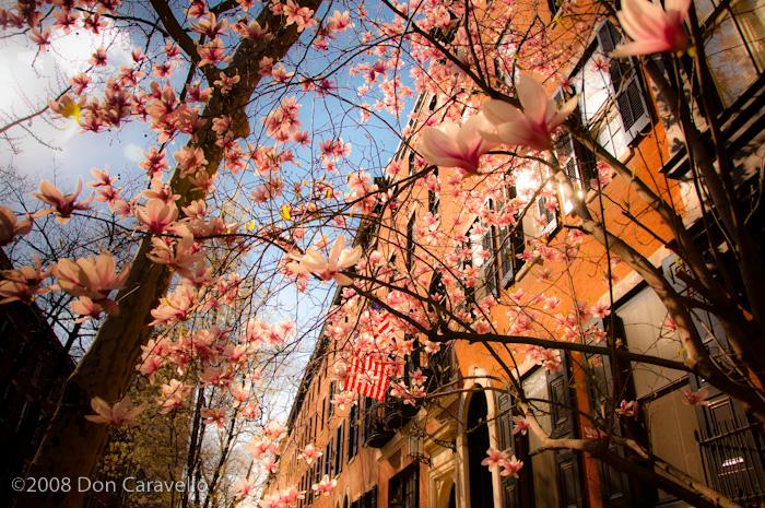 Philadelphia in Spring
